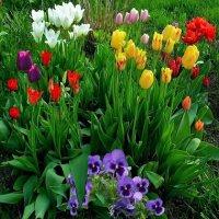 Многолетние цветы для дачи луковичные