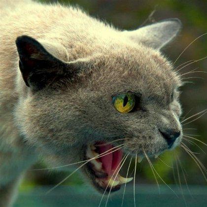 Поцарапал кот: что делать?