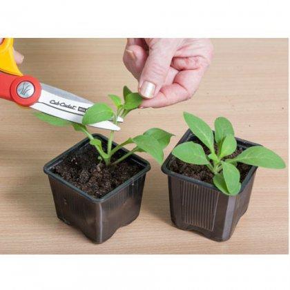 Как прищипывать рассаду?