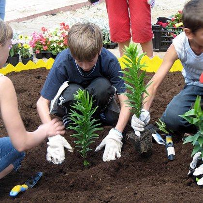 Схема как посадить цветы 674