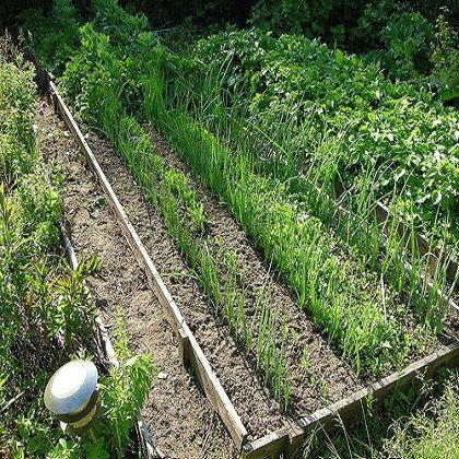 Как делать грядки на огороде: секреты урожайных грядок