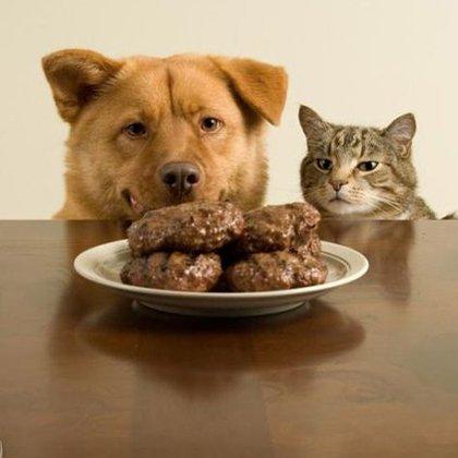 Как выбирать корм для домашних животных?