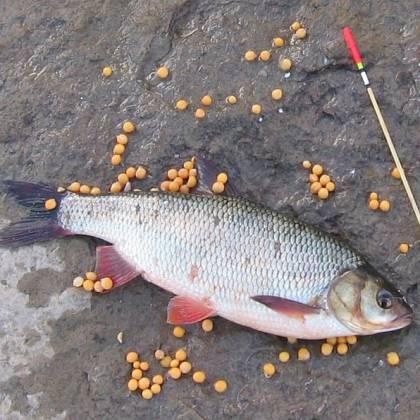 Секреты успешной рыбалки: как использовать активатор клева Fishhungry на язя?