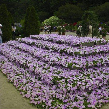 Схема как посадить цветы 442