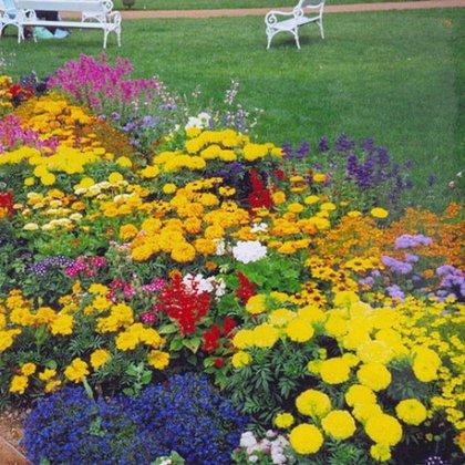 Как подобрать цветы для клумбы?