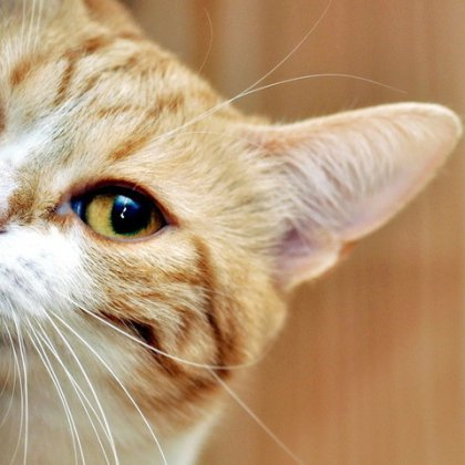 Как видит кошка наш мир и своего хозяина?