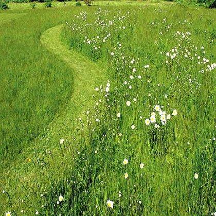 Как вырастить хороший газон?