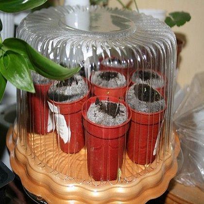 Как правильно высаживать семена в торфяные таблетки?