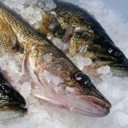 Как сохранить рыбу свежей в жару?