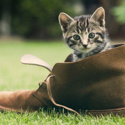 Как убрать запах кошачьей мочи с обуви?