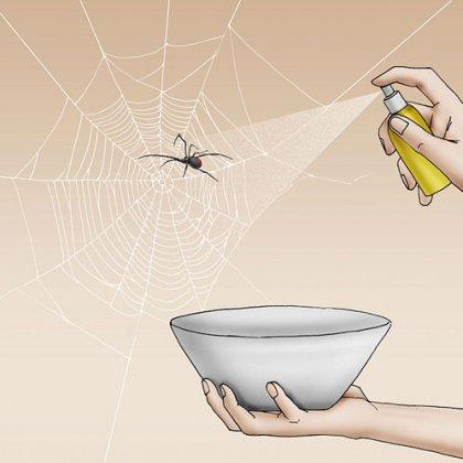 Избавиться от тараканов своими руками 62