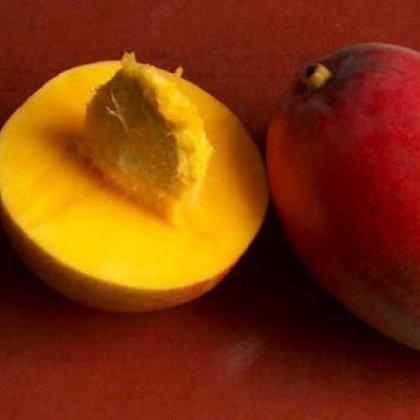 Как прорастить манго?