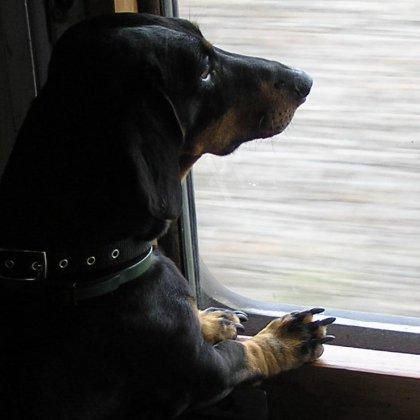 Как отправиться с собакой в отпуск?