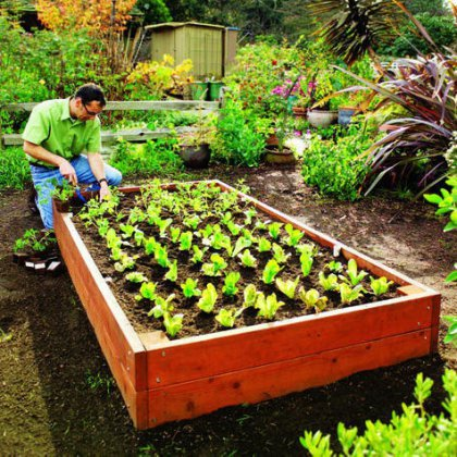Как вести огород?