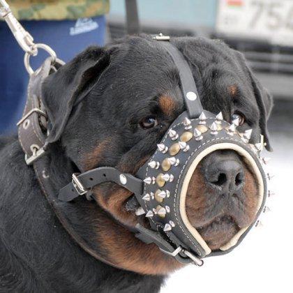 Как одеть намордник на большую собаку?