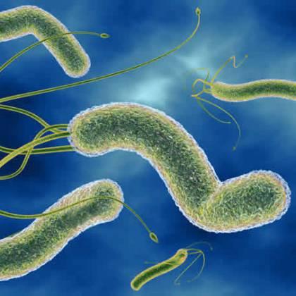 Лечение Хеликобактер пилори без антибиотиков — можно ли ...