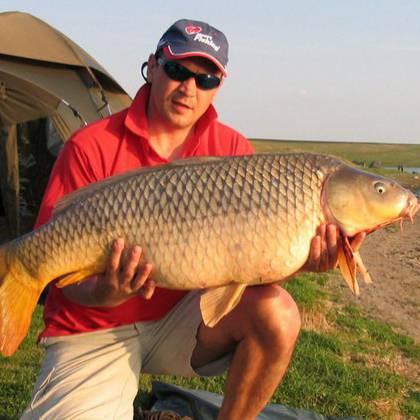 из чего делают fishhungry