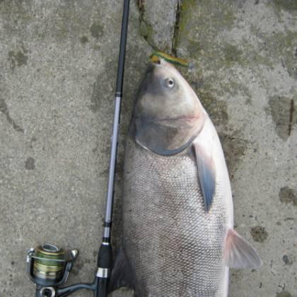 прикормка на толстолоба для ловли со дна