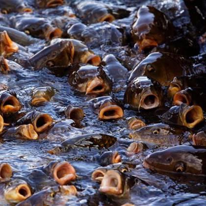 Что такое правильная рыбалка? Отзывы о рыбалке с прикормкой Fishhungry