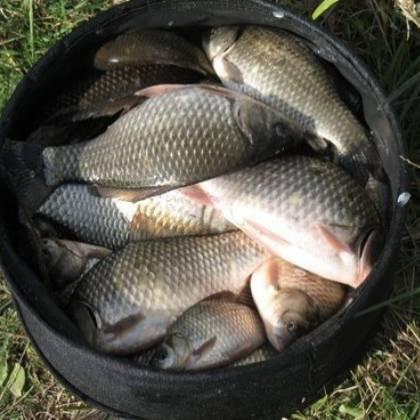 Для тех, кто хочет поймать щуку: Fishhungry как активатор клева для лова щуки