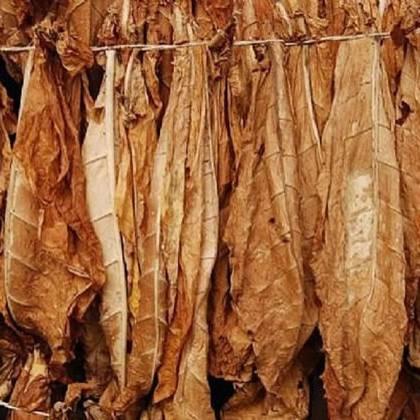 Как сушить табак в домашних условиях: рекомендации