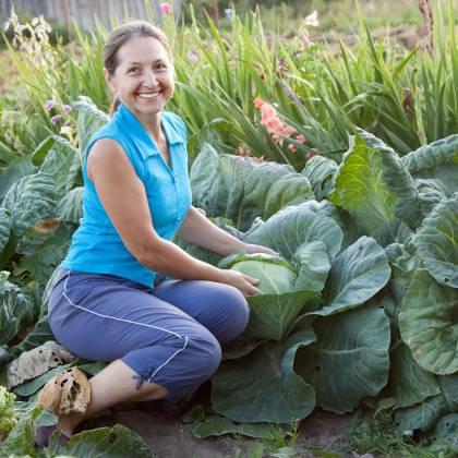 Как выращивать капусту в открытом грунте: советы специалистов