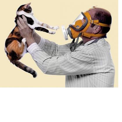Как вылечить аллергию на кошек: природа заболевания. Как избавиться от аллергии на кошек?