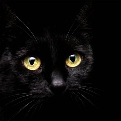 Как назвать черного котенка девочку: выбор имени для котенка