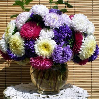Как сохранить срезанные астры в вазе: продлеваем жизнь цветам в вазе