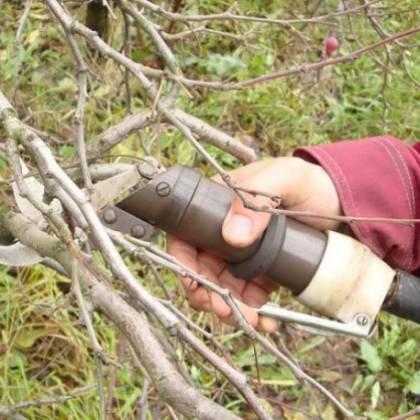 Как правильно подрезать вишню для увеличения плодоношения?