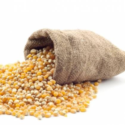 Как приготовить кукурузную муку в домашних условиях?
