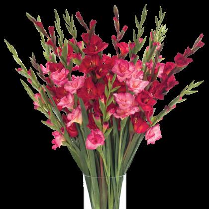Как сохранить свежесть срезанных гладиолусов в вазе?