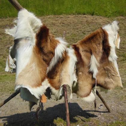 Как самостоятельно выделать шкуру козы в домашних условиях?