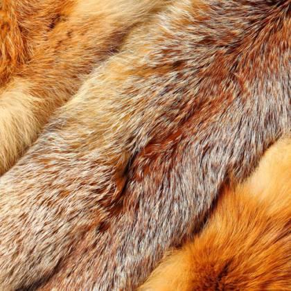 Порядок действий, как выделать шкуру лисы в домашних условиях