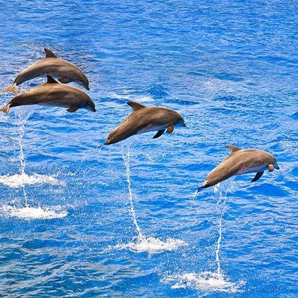Отчего дельфины выпрыгивают из воды?