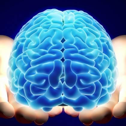 Функции и строение мозжечка