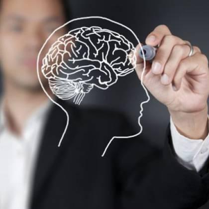 Как работают полушария мозга?