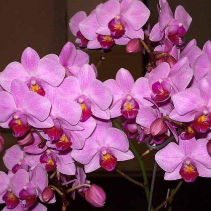 Как правильно обрезать орхидею после цветения?