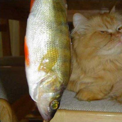 Как кормить кота натуральной пищей?