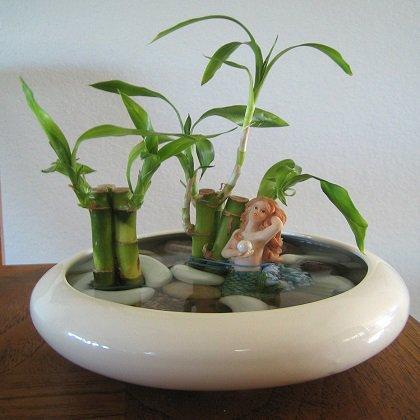 Как вырастить бамбук дома?