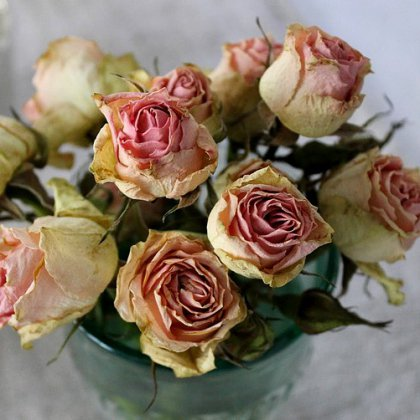 Как правильно засушить розы ?