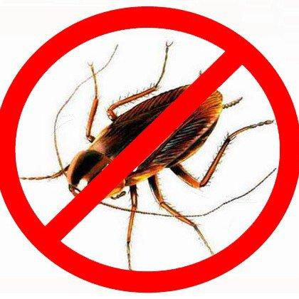 Как вывести тараканов из квартиры и частного дома?