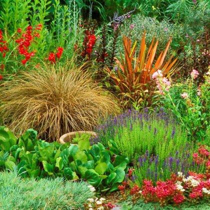 Как выращивать многолетники цветущие все лето?