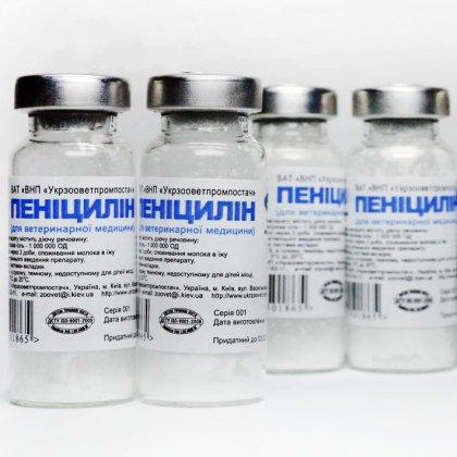 Как можно получить пенициллин в