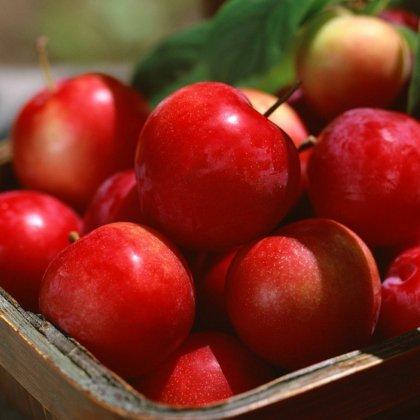 Как сохранить яблоки на зиму?