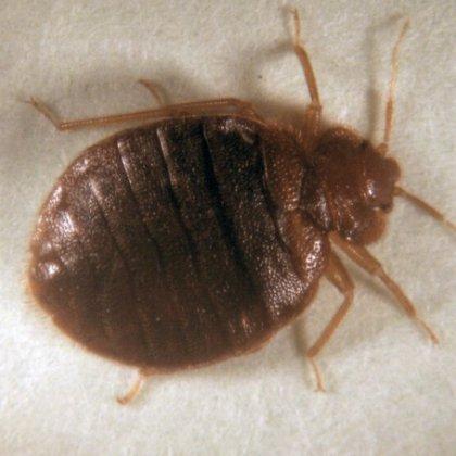 как эффективно избавиться от паразитов в организме
