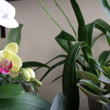 Как лечить орхидею: реанимация больного растения