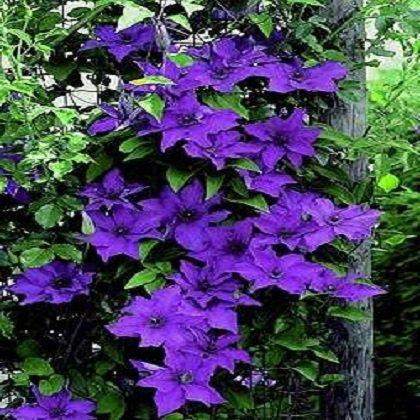 Как посадить цветы в палисаднике: многолетники