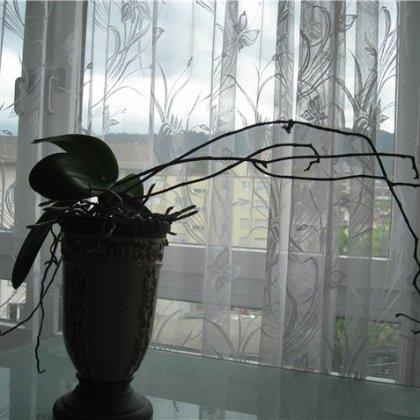 Как ухаживать за отцветшей орхидеей?