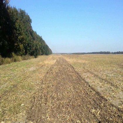 Как сеять пшеницу?